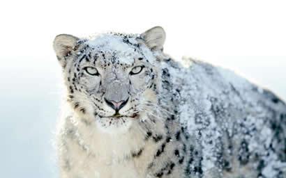 SnowLeopard build 421.jpg